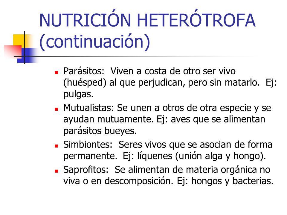 NUTRICIÓN HETERÓTROFA (continuación)