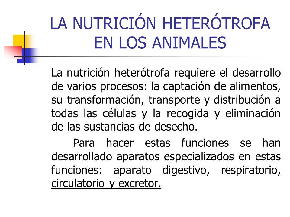 LA NUTRICIÓN HETERÓTROFA EN LOS ANIMALES