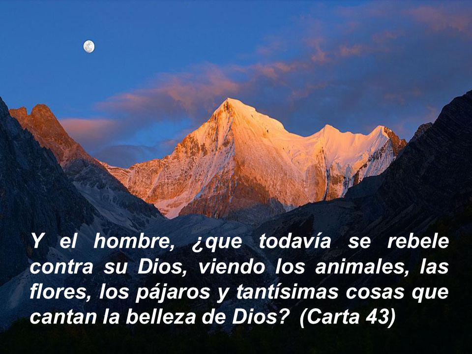 Y el hombre, ¿que todavía se rebele contra su Dios, viendo los animales, las flores, los pájaros y tantísimas cosas que cantan la belleza de Dios (Carta 43)