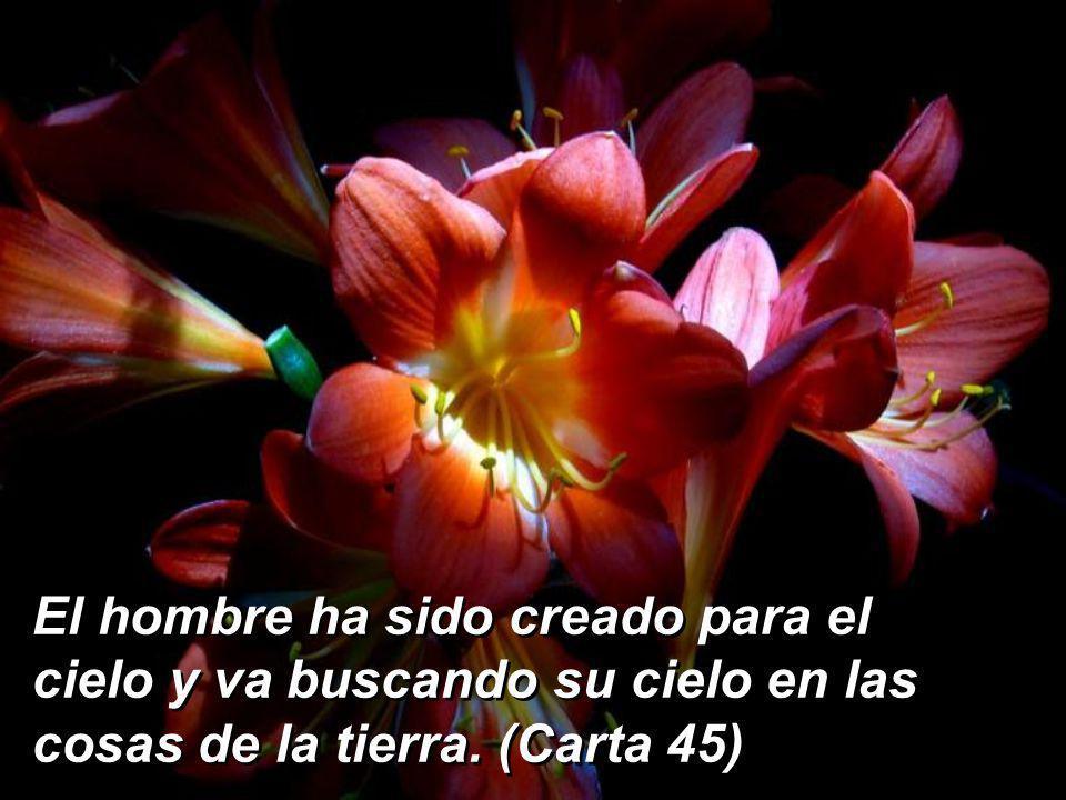 El hombre ha sido creado para el cielo y va buscando su cielo en las cosas de la tierra. (Carta 45)