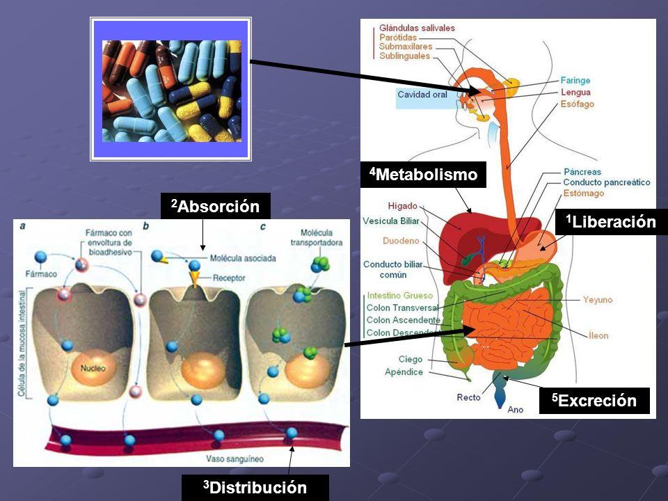 4Metabolismo 2Absorción 1Liberación 5Excreción 3Distribución