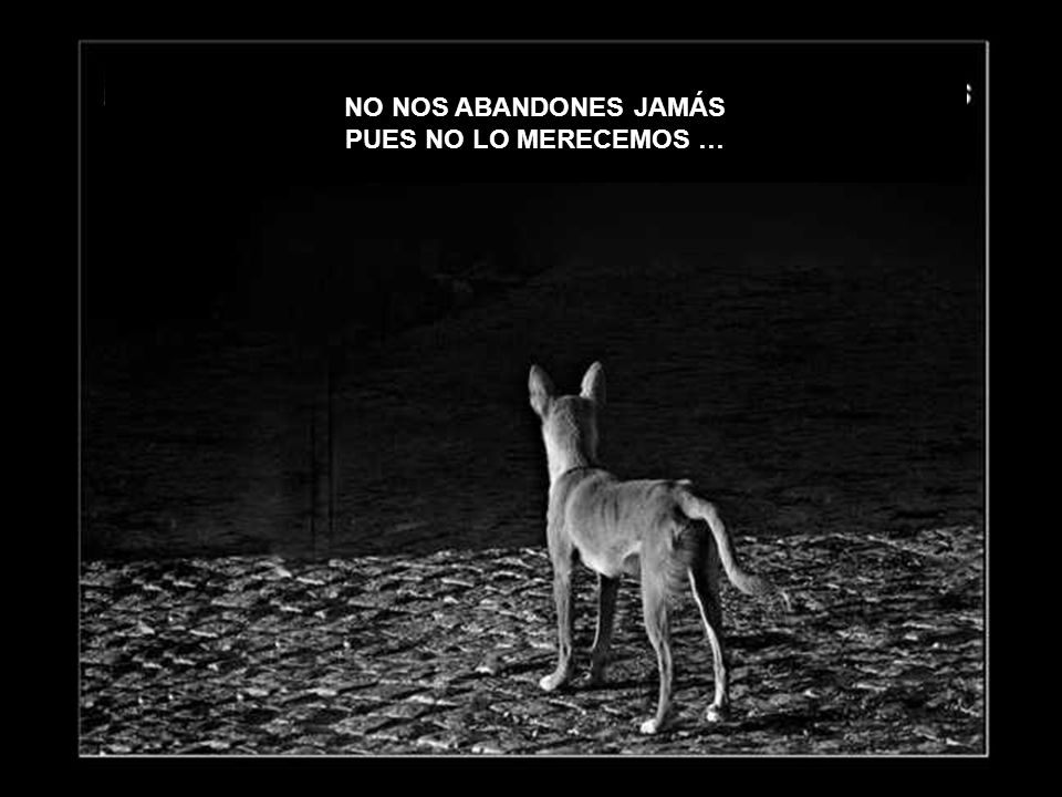 NO NOS ABANDONES JAMÁS PUES NO LO MERECEMOS …