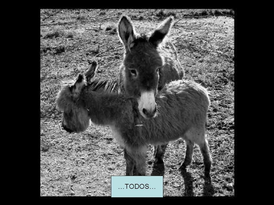…TODOS…