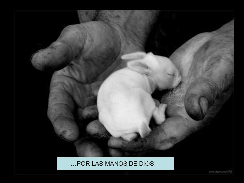 …POR LAS MANOS DE DIOS…
