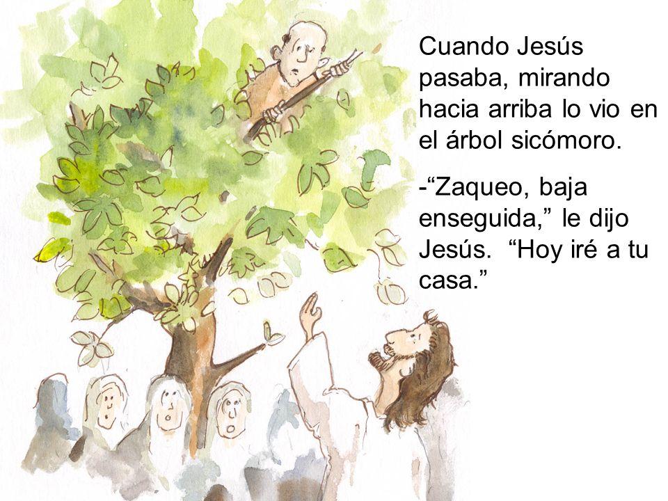Cuando Jesús pasaba, mirando hacia arriba lo vio en el árbol sicómoro.