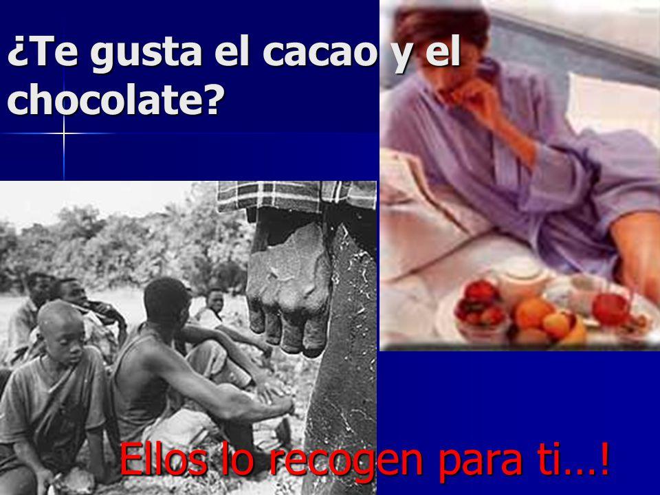 ¿Te gusta el cacao y el chocolate