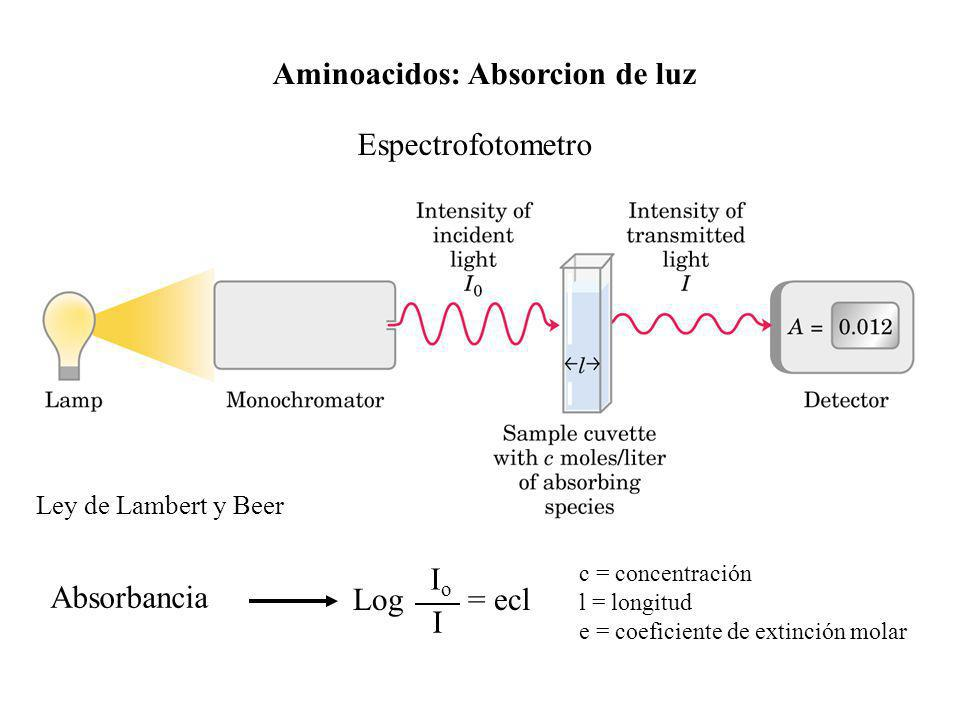 Aminoacidos: Absorcion de luz