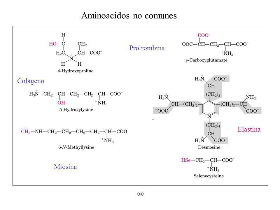 Aminoacidos no comunes
