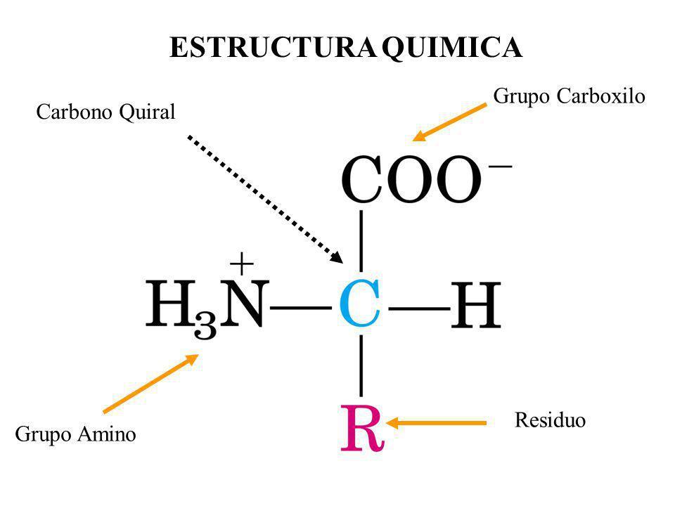 ESTRUCTURA QUIMICA Grupo Carboxilo Carbono Quiral Residuo Grupo Amino