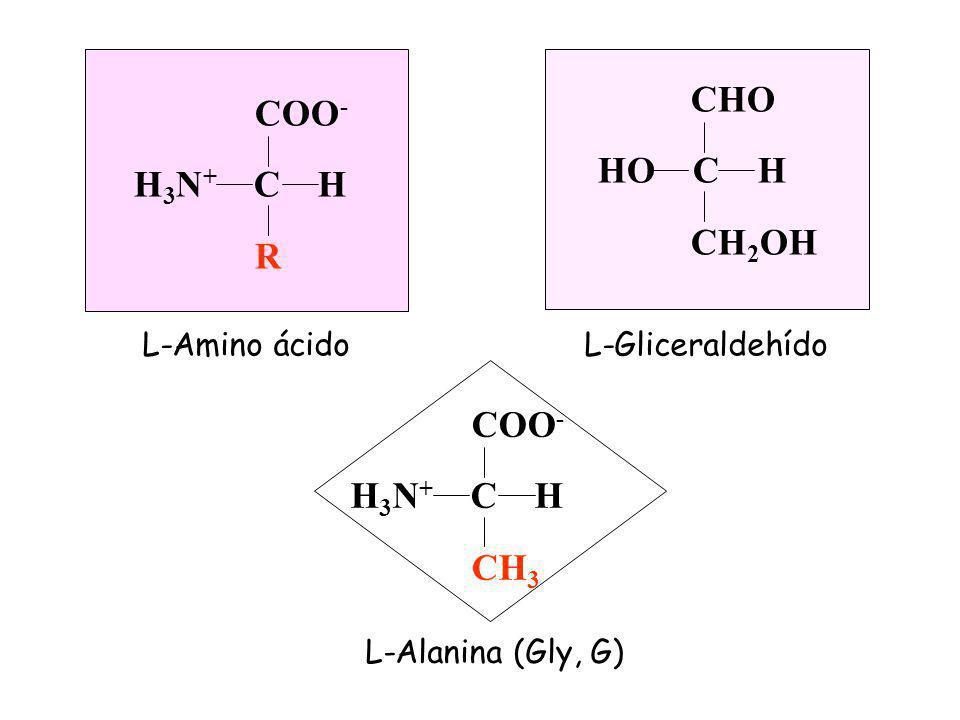 CHO COO- HO C H H3N+ C H CH2OH R COO- H3N+ C H CH3 L-Amino ácido