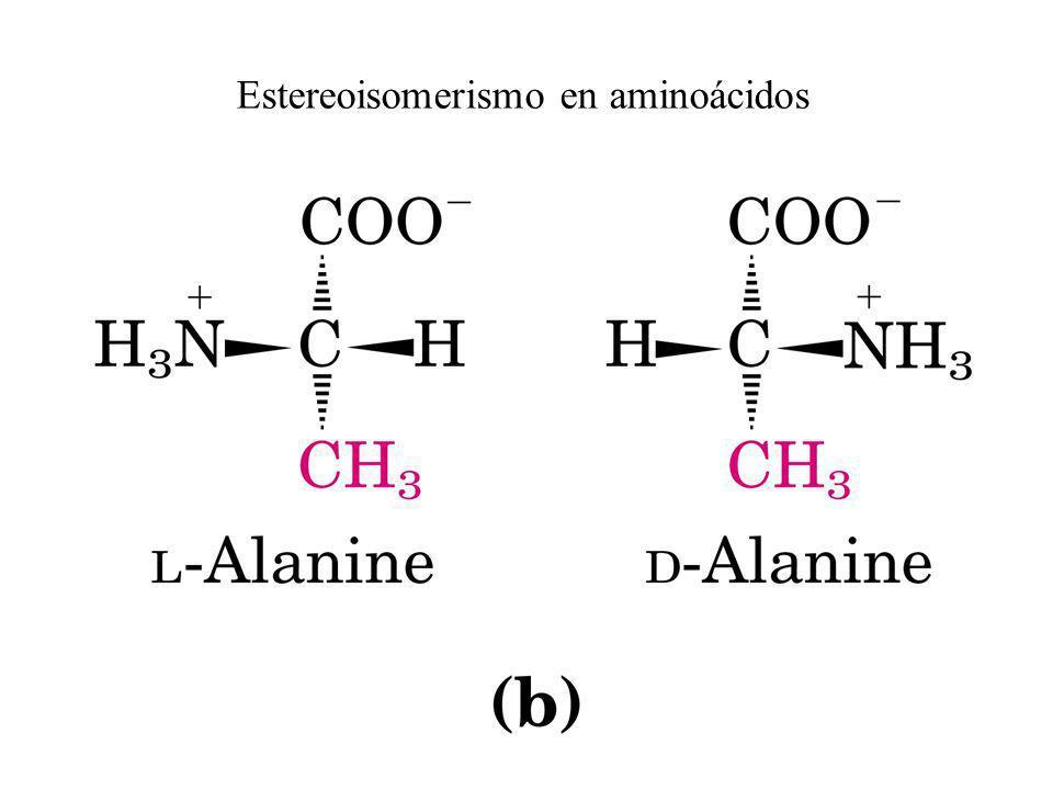 Estereoisomerismo en aminoácidos