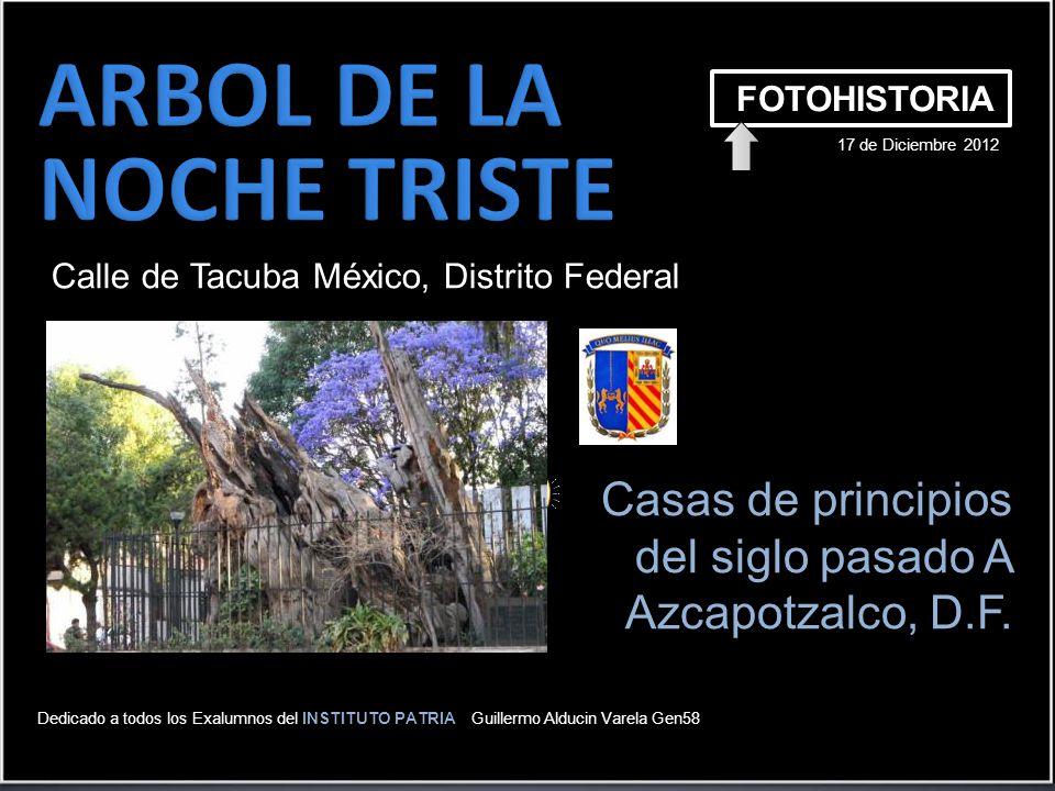 ARBOL DE LA NOCHE TRISTE