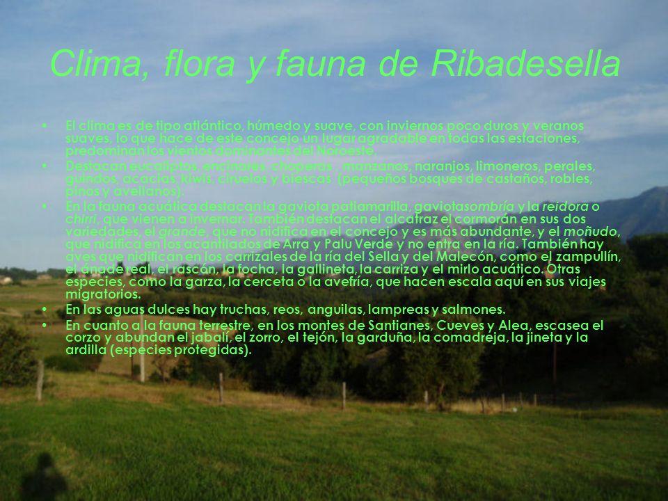 Clima, flora y fauna de Ribadesella