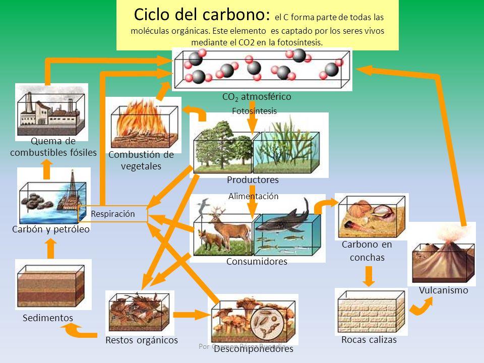 Quema de combustibles fósiles Combustión de vegetales