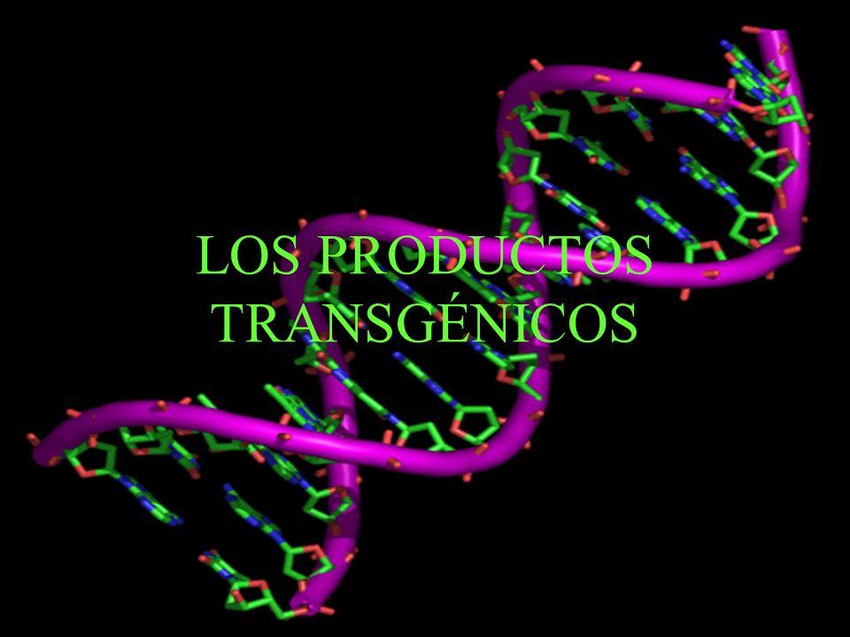 LOS PRODUCTOS TRANSGÉNICOS