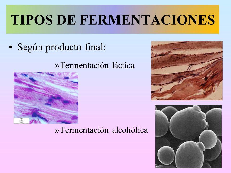 TIPOS DE FERMENTACIONES
