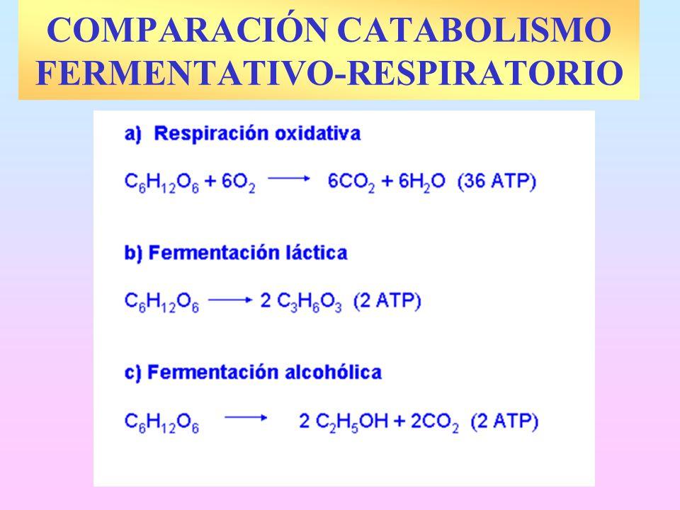 COMPARACIÓN CATABOLISMO FERMENTATIVO-RESPIRATORIO