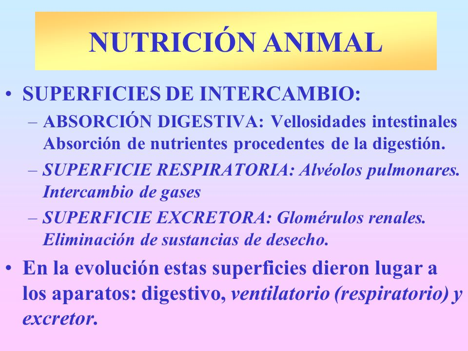 NUTRICIÓN ANIMAL SUPERFICIES DE INTERCAMBIO: