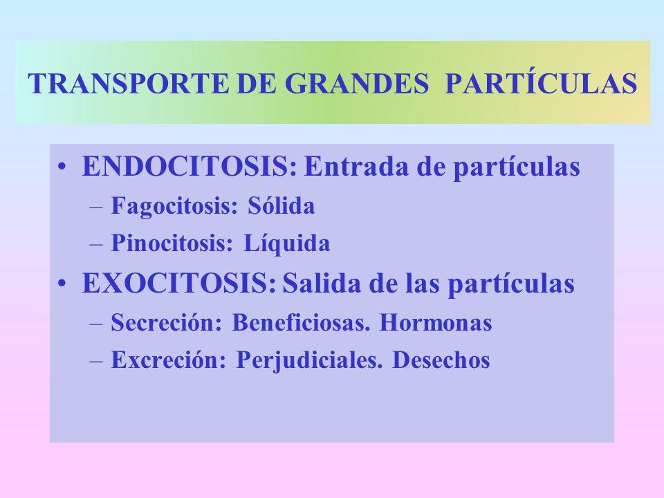 TRANSPORTE DE GRANDES PARTÍCULAS