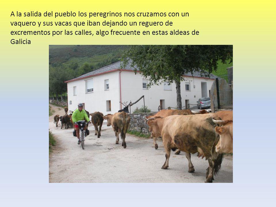 A la salida del pueblo los peregrinos nos cruzamos con un vaquero y sus vacas que iban dejando un reguero de excrementos por las calles, algo frecuente en estas aldeas de Galicia