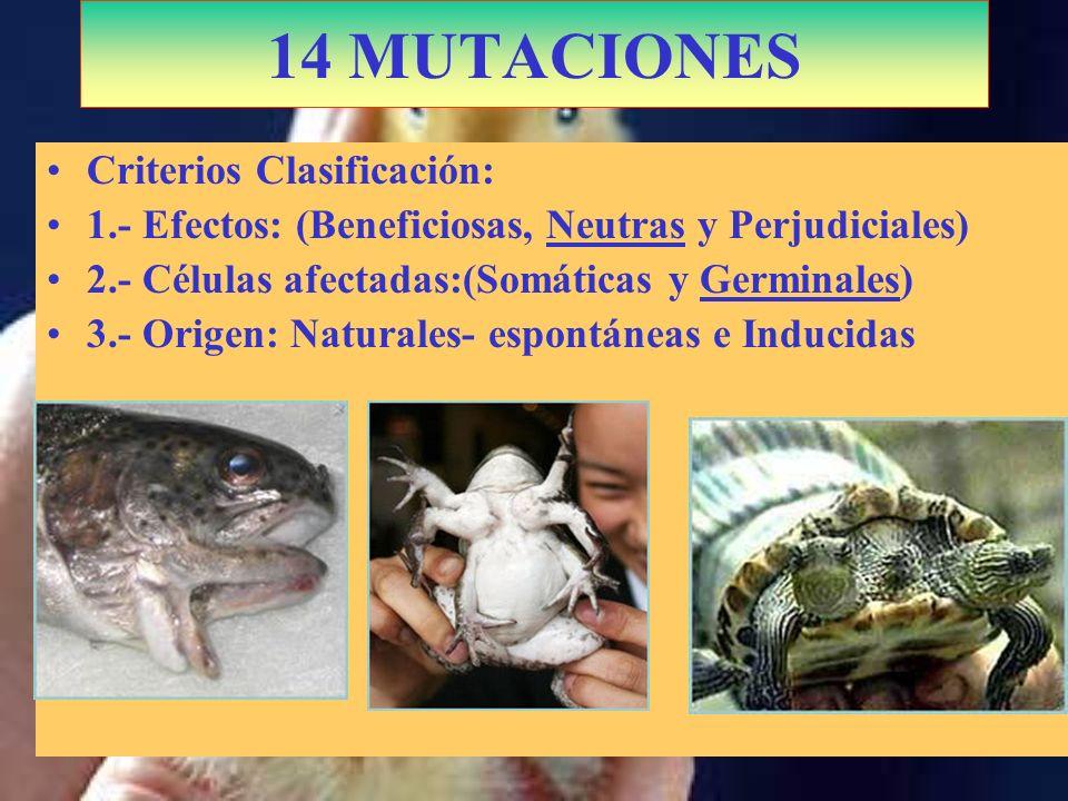 14 MUTACIONES Criterios Clasificación: