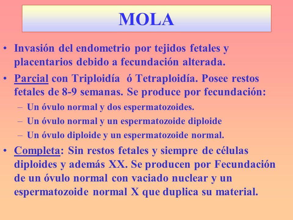 MOLAInvasión del endometrio por tejidos fetales y placentarios debido a fecundación alterada.