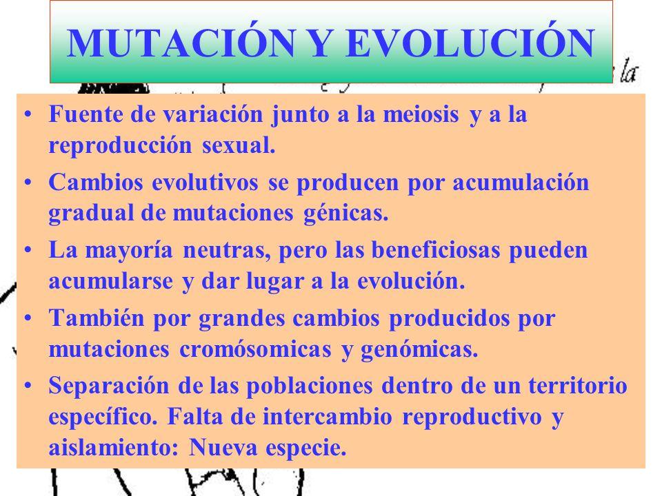 MUTACIÓN Y EVOLUCIÓN Fuente de variación junto a la meiosis y a la reproducción sexual.
