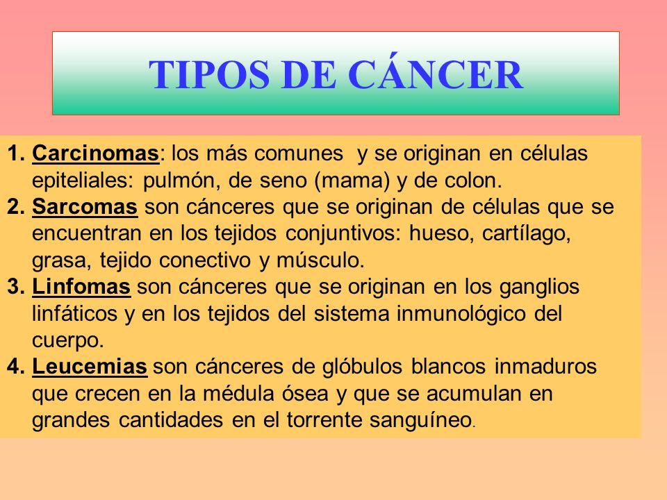 TIPOS DE CÁNCERCarcinomas: los más comunes y se originan en células epiteliales: pulmón, de seno (mama) y de colon.