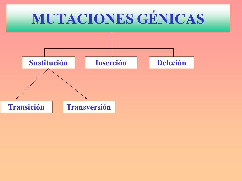 MUTACIONES GÉNICAS Sustitución Inserción Deleción Transición