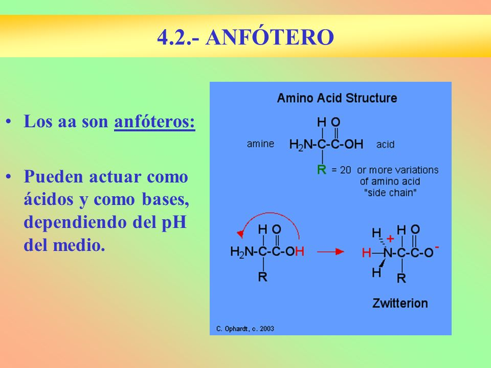 4.2.- ANFÓTERO Los aa son anfóteros: