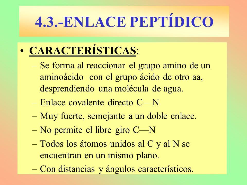4.3.-ENLACE PEPTÍDICO CARACTERÍSTICAS:
