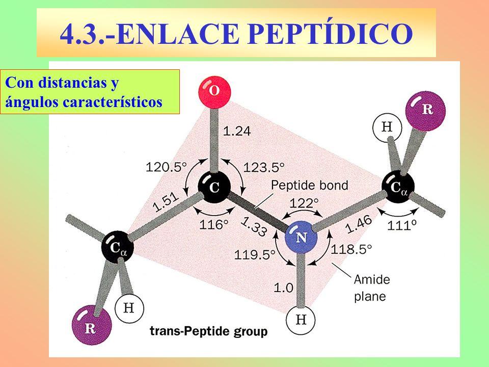 4.3.-ENLACE PEPTÍDICO Con distancias y ángulos característicos