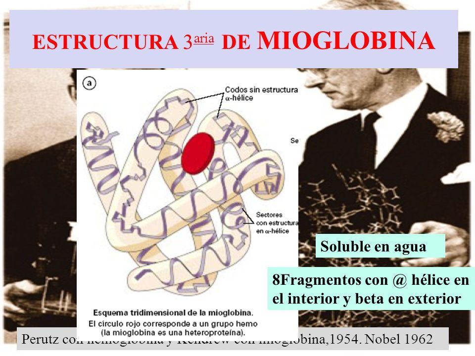 ESTRUCTURA 3aria DE MIOGLOBINA