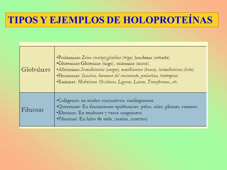 TIPOS Y EJEMPLOS DE HOLOPROTEÍNAS