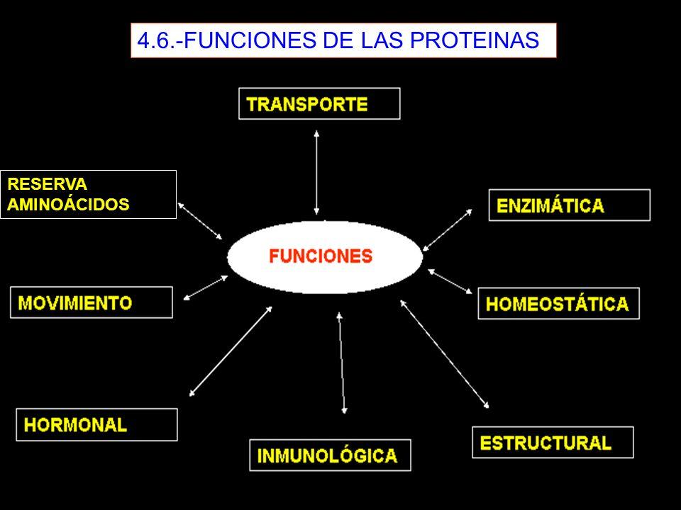 4.6.-FUNCIONES DE LAS PROTEINAS