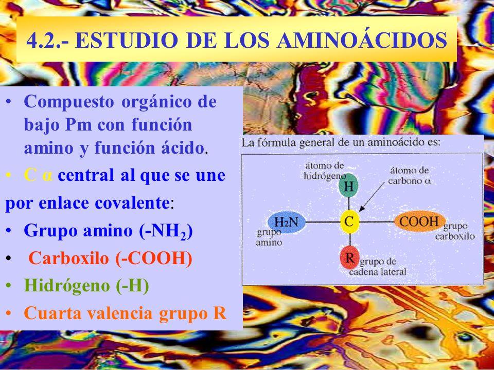 4.2.- ESTUDIO DE LOS AMINOÁCIDOS