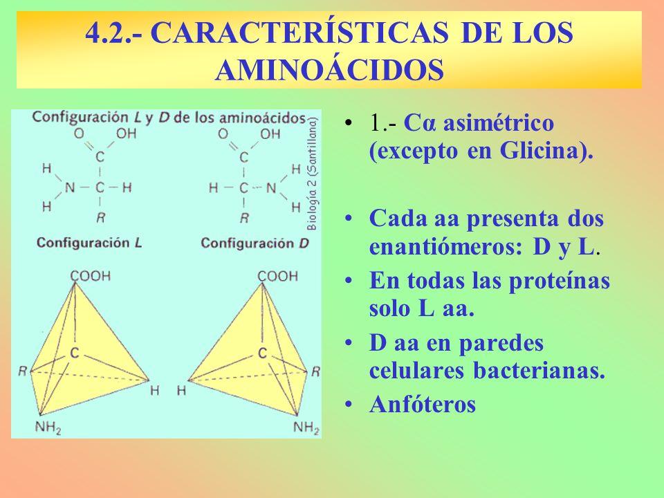 4.2.- CARACTERÍSTICAS DE LOS AMINOÁCIDOS