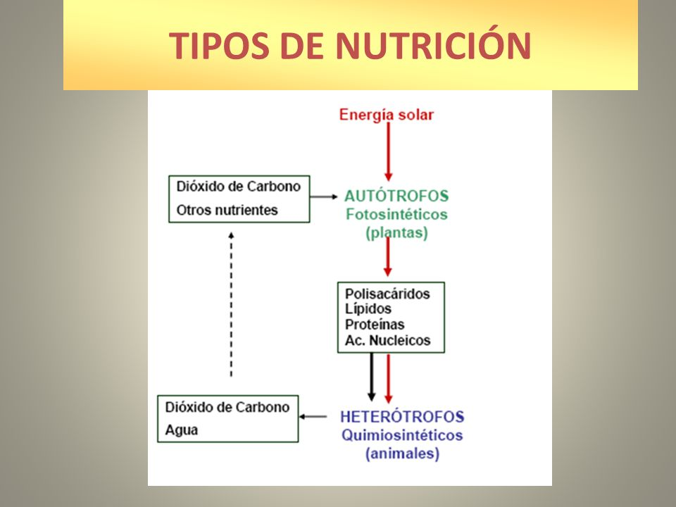 TIPOS DE NUTRICIÓN
