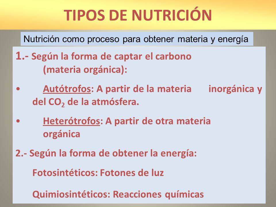 TIPOS DE NUTRICIÓN Nutrición como proceso para obtener materia y energía. 1.- Según la forma de captar el carbono (materia orgánica):
