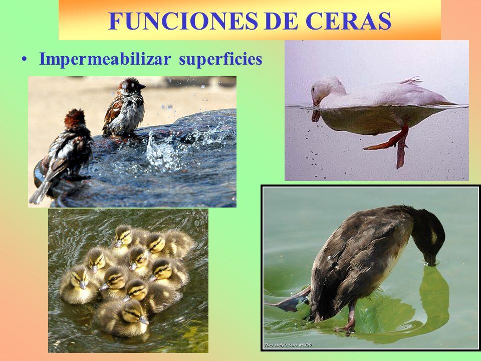 FUNCIONES DE CERAS Impermeabilizar superficies