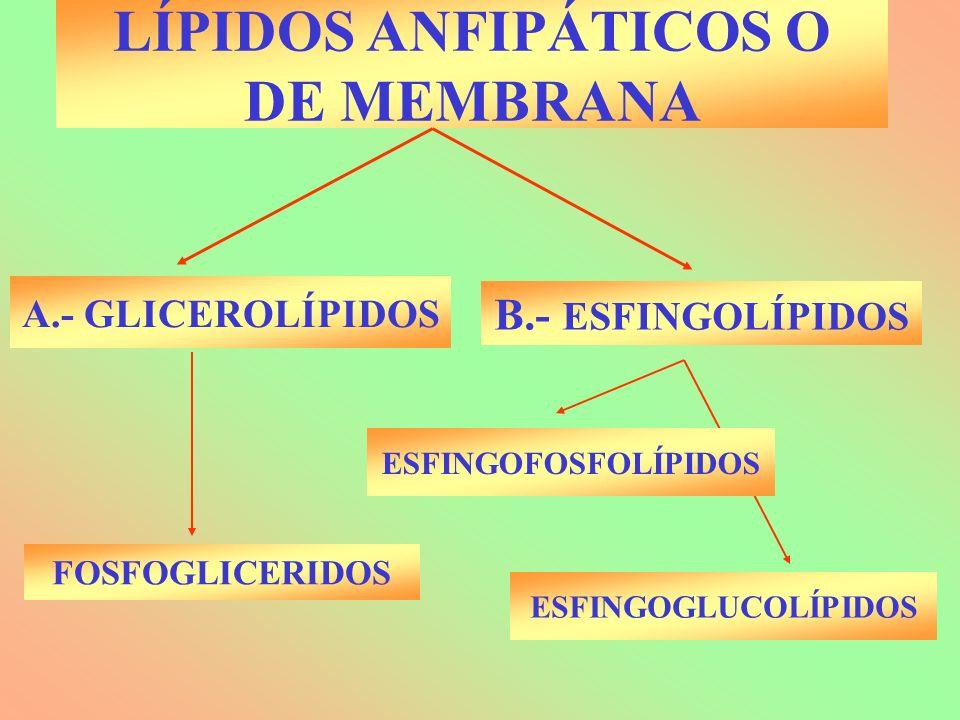 LÍPIDOS ANFIPÁTICOS O DE MEMBRANA