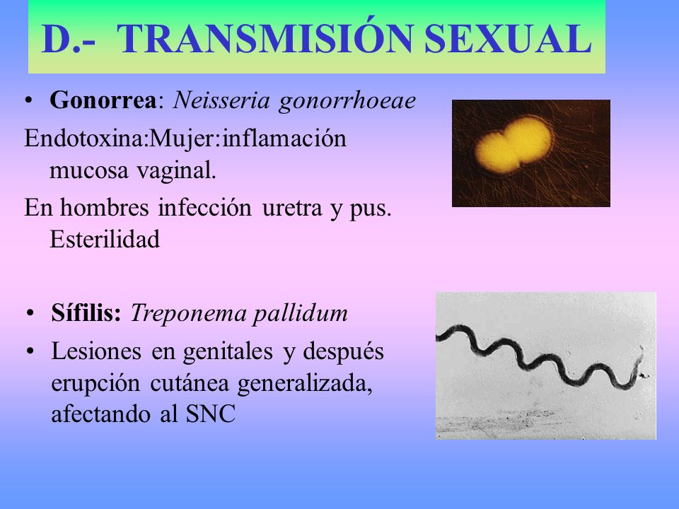 D.- TRANSMISIÓN SEXUAL Gonorrea: Neisseria gonorrhoeae