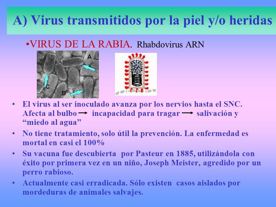 A) Virus transmitidos por la piel y/o heridas