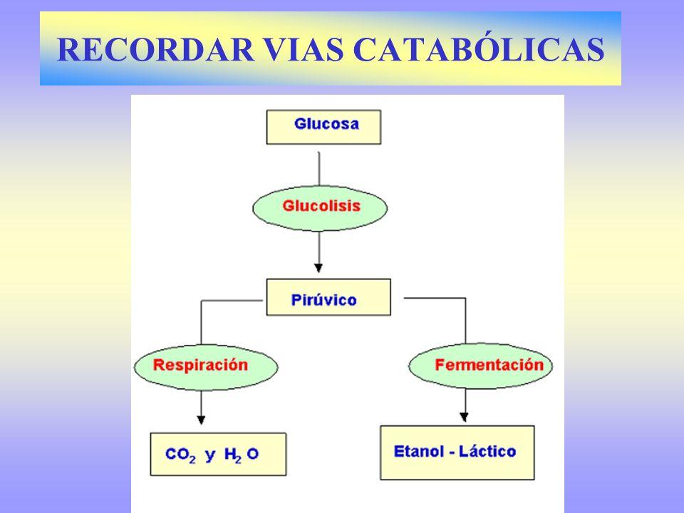 RECORDAR VIAS CATABÓLICAS