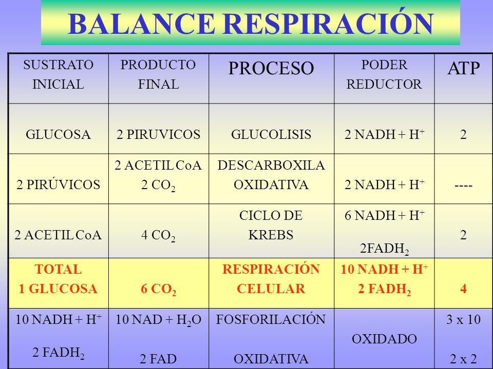 BALANCE RESPIRACIÓN PROCESO ATP SUSTRATO INICIAL PRODUCTO FINAL PODER