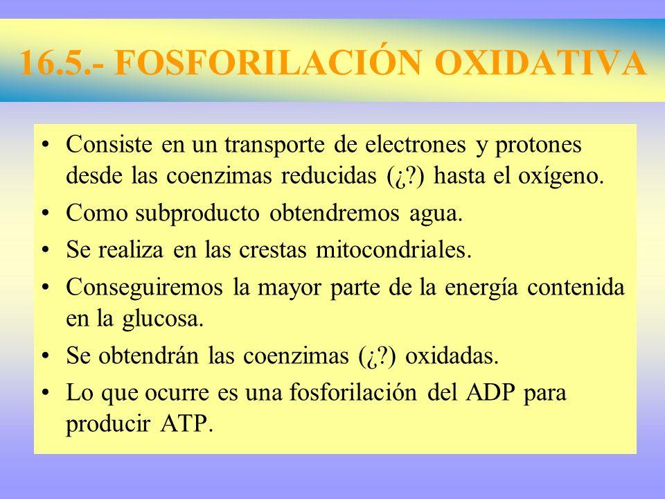 16.5.- FOSFORILACIÓN OXIDATIVA