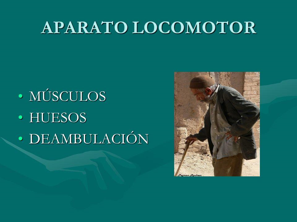 APARATO LOCOMOTOR MÚSCULOS HUESOS DEAMBULACIÓN