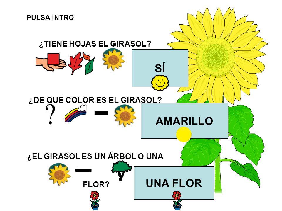 SÍ AMARILLO UNA FLOR ¿TIENE HOJAS EL GIRASOL
