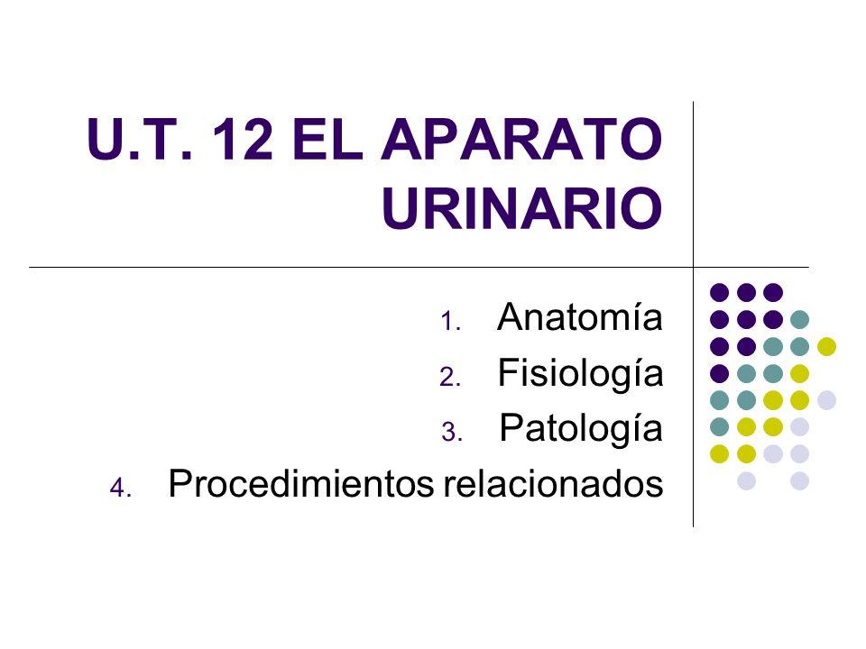 Anatomía Fisiología Patología Procedimientos relacionados