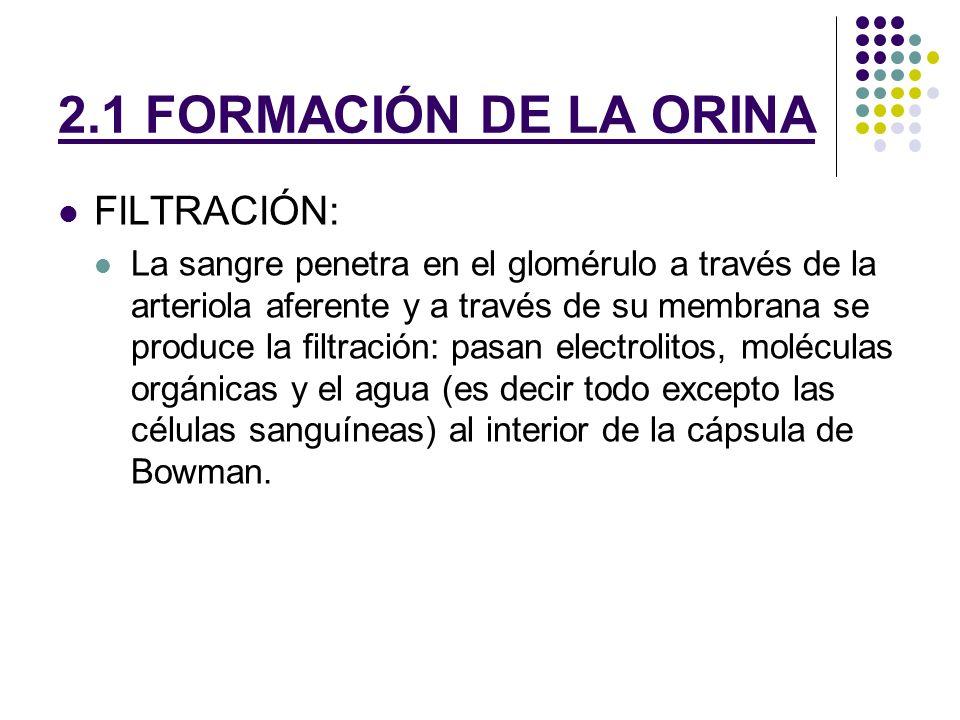 2.1 FORMACIÓN DE LA ORINA FILTRACIÓN: